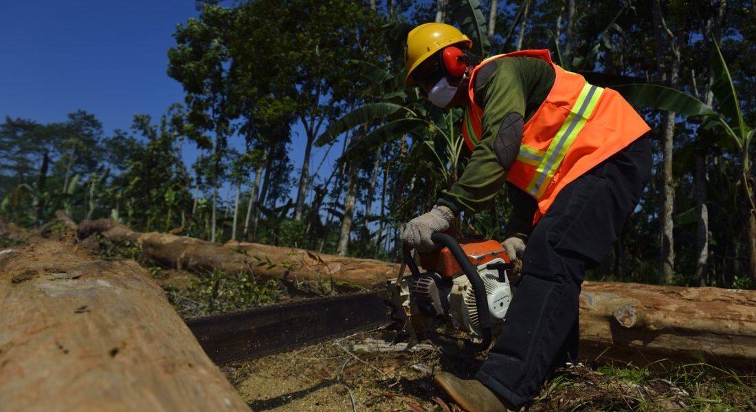 Kalimantan, Borneo indonesiano: un operatore forestale, munito di casco, guanti, maschera e scarponi, procede alla preparazione per il trasporto di alcuni tronchi