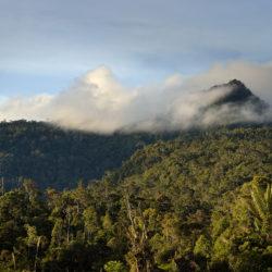 La gestione forestale responsabile in immagini