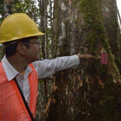 Lesser known timber species: diversificare il mercato delle specie legnose per ridurre la pressione sulle foreste